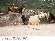 Купить «italy animals herd sardinia goats», фото № 9793961, снято 26 мая 2019 г. (c) PantherMedia / Фотобанк Лори