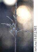 Купить «plant winter cold ice snowfall», фото № 9812981, снято 27 марта 2019 г. (c) PantherMedia / Фотобанк Лори