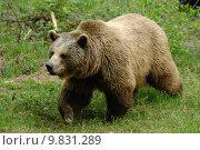 Купить «skin bear claws fur braunb», фото № 9831289, снято 17 декабря 2018 г. (c) PantherMedia / Фотобанк Лори