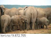 Купить «Elephants in Addo Park», фото № 9872705, снято 17 июня 2019 г. (c) PantherMedia / Фотобанк Лори