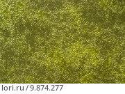 Купить «substrate algae slime chlorophyll wasseroberfl», фото № 9874277, снято 21 июля 2019 г. (c) PantherMedia / Фотобанк Лори
