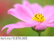 Купить «pink flowers blossoming in spring», фото № 9876005, снято 19 июня 2018 г. (c) PantherMedia / Фотобанк Лори