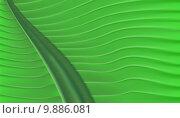 Купить «Tropical Green Leaf Background Texture», фото № 9886081, снято 17 июня 2019 г. (c) PantherMedia / Фотобанк Лори