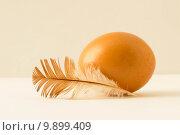 Яйцо куриное и перо. Стоковое фото, фотограф Чулпан Нигметзянова / Фотобанк Лори
