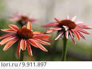 Купить «medicine leaves blossom bloom alternative», фото № 9911897, снято 27 мая 2019 г. (c) PantherMedia / Фотобанк Лори