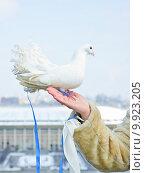 Купить «Белый почтовый голубь сидящий на женской руке», эксклюзивное фото № 9923205, снято 24 марта 2012 г. (c) Алёшина Оксана / Фотобанк Лори