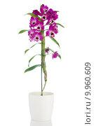 Купить «Beautiful pink orchid in a flowerpot», фото № 9960609, снято 23 июля 2019 г. (c) PantherMedia / Фотобанк Лори