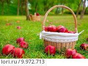 Купить «apples in basket on a grass trees field», фото № 9972713, снято 23 октября 2019 г. (c) PantherMedia / Фотобанк Лори