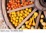 Купить «different sorts of decorative pumpkins», фото № 9999941, снято 20 ноября 2017 г. (c) PantherMedia / Фотобанк Лори
