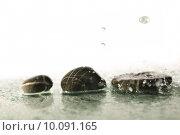 Купить «isolated wet zen stones with splashing  water drops», фото № 10091165, снято 18 июля 2019 г. (c) PantherMedia / Фотобанк Лори