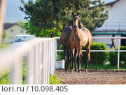 Купить «baby horse», фото № 10098405, снято 17 июня 2019 г. (c) PantherMedia / Фотобанк Лори
