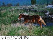 Купить «horse nature», фото № 10101805, снято 17 июня 2019 г. (c) PantherMedia / Фотобанк Лори