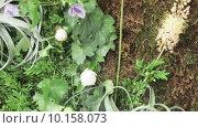 Купить «Цветочная стена», видеоролик № 10158073, снято 27 июня 2015 г. (c) Потийко Сергей / Фотобанк Лори