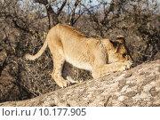 Купить «young nature animal vertical africa», фото № 10177905, снято 17 июня 2019 г. (c) PantherMedia / Фотобанк Лори