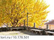 Купить «Осенняя пора в парке», фото № 10178501, снято 28 декабря 2013 г. (c) Татьяна Кахилл / Фотобанк Лори