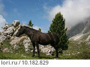 Купить «Italian Dolomites», фото № 10182829, снято 18 октября 2018 г. (c) PantherMedia / Фотобанк Лори
