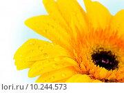 Купить «Close-up of daisy», фото № 10244573, снято 15 декабря 2018 г. (c) PantherMedia / Фотобанк Лори