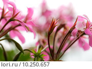 Купить «beautiful red close up plant», фото № 10250657, снято 10 декабря 2018 г. (c) PantherMedia / Фотобанк Лори