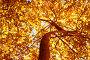 Autumn tree background, фото № 10330469, снято 21 сентября 2017 г. (c) PantherMedia / Фотобанк Лори