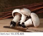 Купить «mushrooms substrate myzel pilzbrut pilzmyzel», фото № 10378405, снято 21 июля 2019 г. (c) PantherMedia / Фотобанк Лори