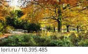 Купить «View to entrance of park in autumn», фото № 10395485, снято 15 февраля 2019 г. (c) PantherMedia / Фотобанк Лори