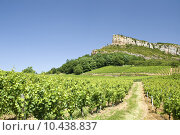 Купить «Roche de Solutre, with vineyard. France.», фото № 10438837, снято 19 сентября 2019 г. (c) PantherMedia / Фотобанк Лори