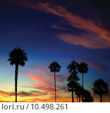 Купить «Palm Tree Sunset», фото № 10498261, снято 21 марта 2019 г. (c) PantherMedia / Фотобанк Лори