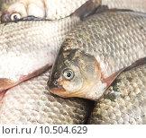 Купить «Куча свежей рыбы», фото № 10504629, снято 14 августа 2015 г. (c) Насыров Руслан / Фотобанк Лори