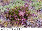Гриб в фиолетовых тонах. Стоковое фото, фотограф Виталий Пушкарев / Фотобанк Лори