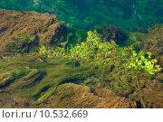 Купить «Algae », фото № 10532669, снято 19 июля 2019 г. (c) PantherMedia / Фотобанк Лори