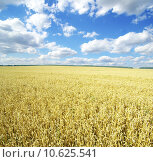 Купить « wheat field», фото № 10625541, снято 19 октября 2018 г. (c) PantherMedia / Фотобанк Лори