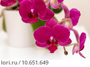 Pink orchid flower. Стоковое фото, фотограф Miroslaw Doupal / PantherMedia / Фотобанк Лори