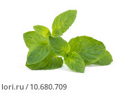 Купить «mint leaves isolated on white», фото № 10680709, снято 23 июля 2019 г. (c) PantherMedia / Фотобанк Лори
