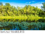 Купить «Лесное озеро и желтые водяные лилии (Nuphar lutea). Летний пейзаж», фото № 10683813, снято 8 июля 2015 г. (c) Сергей Лысенко / Фотобанк Лори