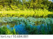 Купить «Пейзаж с заросшим прудом», фото № 10684881, снято 8 июля 2015 г. (c) Сергей Лысенко / Фотобанк Лори