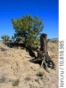 Купить «Life and death in New Mexico», фото № 10818985, снято 20 июня 2019 г. (c) PantherMedia / Фотобанк Лори