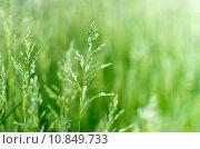 Купить «green grass», фото № 10849733, снято 20 марта 2019 г. (c) PantherMedia / Фотобанк Лори