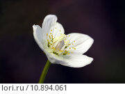 Купить «close up macro blossom bloom», фото № 10894061, снято 16 октября 2018 г. (c) PantherMedia / Фотобанк Лори