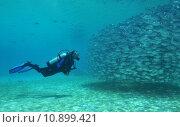 Купить «fish fishes diver mackerel pisces», фото № 10899421, снято 27 мая 2019 г. (c) PantherMedia / Фотобанк Лори