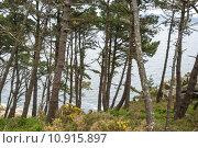 Купить «Forest at Cies island natural park, Galicia», фото № 10915897, снято 16 июля 2019 г. (c) PantherMedia / Фотобанк Лори