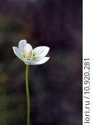 Купить «close up macro blossom bloom», фото № 10920281, снято 16 октября 2018 г. (c) PantherMedia / Фотобанк Лори