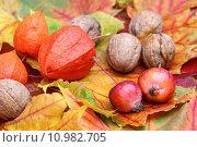 Купить «autumn gorgeous leaves fall apple», фото № 10982705, снято 21 ноября 2019 г. (c) PantherMedia / Фотобанк Лори