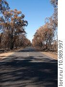 Купить «After the Bushfire», фото № 10989997, снято 27 марта 2019 г. (c) PantherMedia / Фотобанк Лори