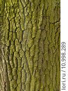 Купить «Wood - Holz», фото № 10998289, снято 23 мая 2019 г. (c) PantherMedia / Фотобанк Лори