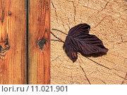 Купить «tree wood trunk holzfassade holzverarbeitung», фото № 11021901, снято 16 июля 2019 г. (c) PantherMedia / Фотобанк Лори