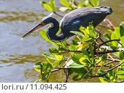 Купить «nature wildlife bird birds florida», фото № 11094425, снято 6 июля 2020 г. (c) PantherMedia / Фотобанк Лори
