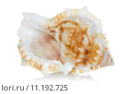 Купить «Sea shell with reflection on  a white», фото № 11192725, снято 25 июня 2019 г. (c) PantherMedia / Фотобанк Лори