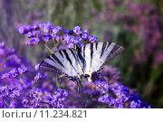Бабочка на цветах. Стоковое фото, фотограф Алексей Дмитриев / Фотобанк Лори