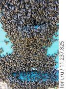 Пчелы на улье. Стоковое фото, фотограф Алексей Дмитриев / Фотобанк Лори