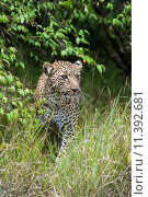 Купить «nature green animal holiday sport», фото № 11392681, снято 21 марта 2019 г. (c) PantherMedia / Фотобанк Лори
